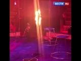 Цирковой тигр потерял сознание во время выступления в Магнитогорске