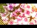 Все же цветы просто прекрасны