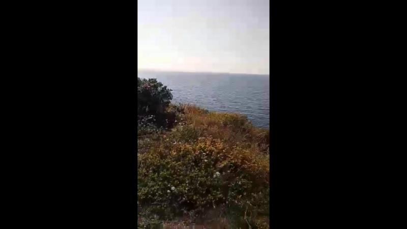 Video-f295971b4f4453502d0ada78f76d481a-V.mp4