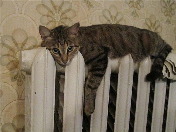 Когда начнется отопительный сезон в Новосибирске осенью 2018: когда дадут тепло