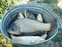 Супер рыболовная насадка ЗЯБРА Клюет всё что движется
