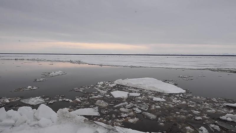 Ледоход на реке Обь 16 мая 2016г, район г Салехард. Ledokhod Ob 17 05 2016
