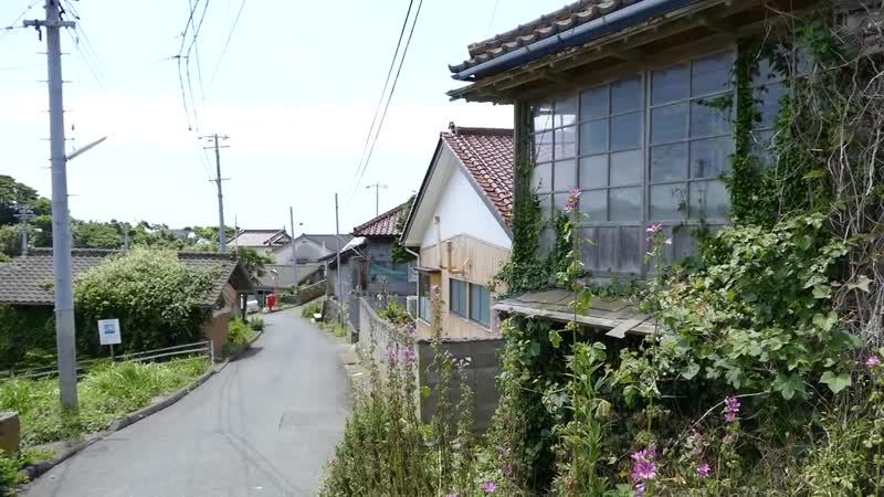 CAT ISLAND in Japan! 猫島 (宮城県) Tashirojima Кошачий остров!