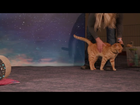 Marvel Studios' Captain Marvel - Goose the Cat LIVE!