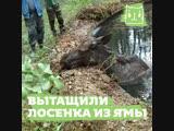 Спасли провалившегося в яму с водой лосенка
