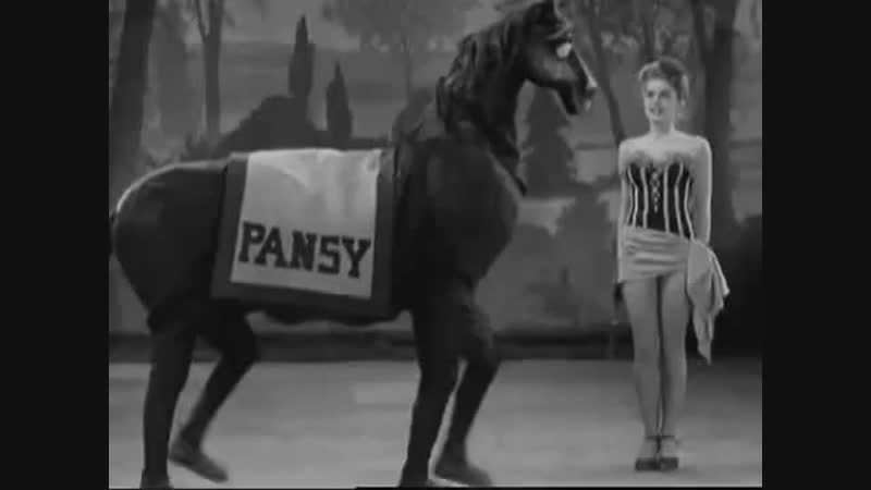 Pansy the dancing horse