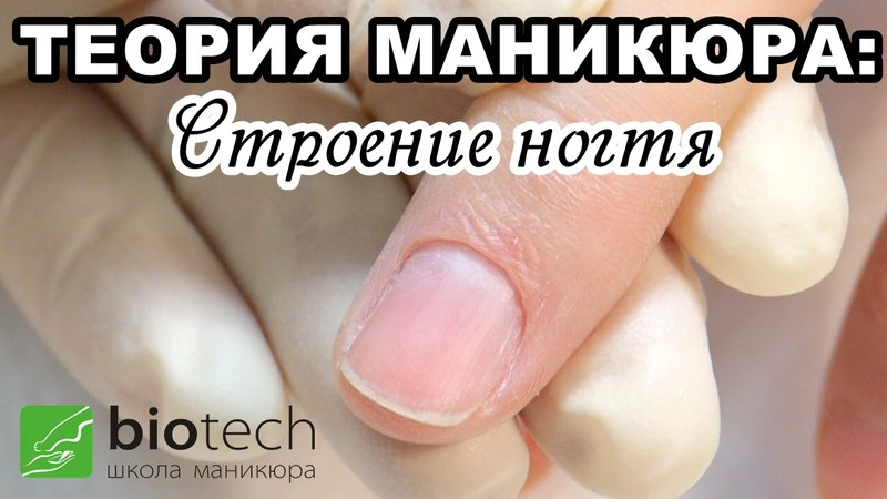 ТЕОРИЯ МАНИКЮРА Часть 1: Строение ногтя