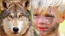 Мальчишка спас маленького волчонка А когда волчонок подрос он отплатил ему добром Волчья верность