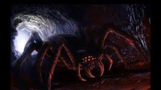 MonsterQuest - Aracnídeos Gigantes