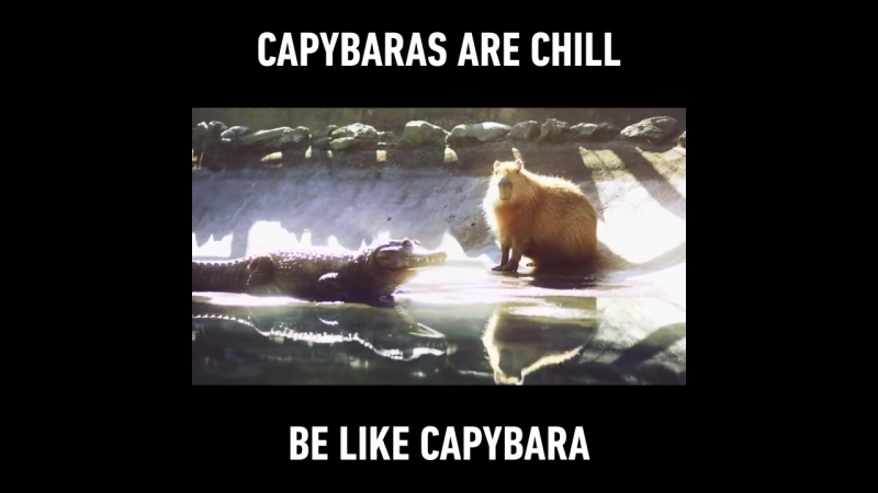 Капибара - Будда царства животных