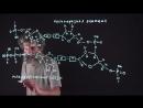 35 Полимеразная реакция