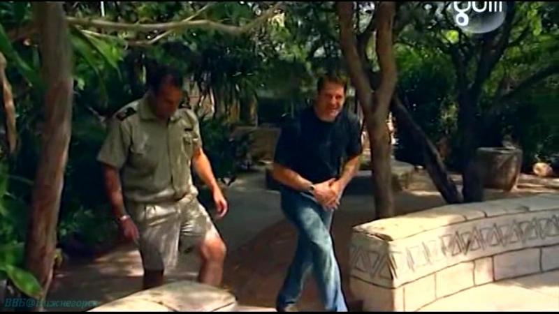 BBC «Самые опасные хищники (01). Южная Африка 1» (Познавательный, природа, животные, 2009)