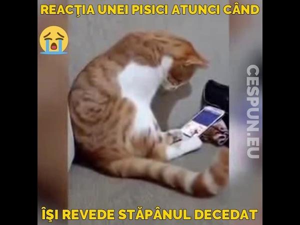 Reacţia unei pisici când îşi revede stăpânul decedat pe telefon