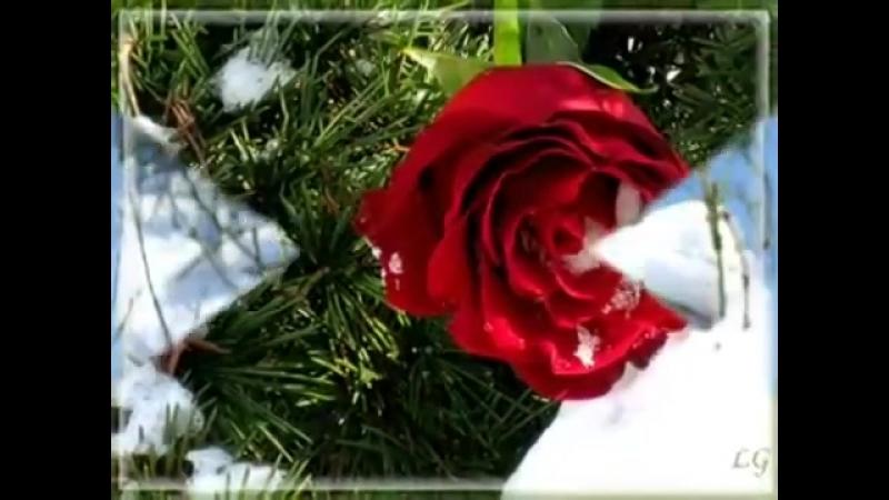 Фаусто Папетти Роза на снегу