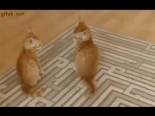 Ржачные коты и другие прикольные короткие видео