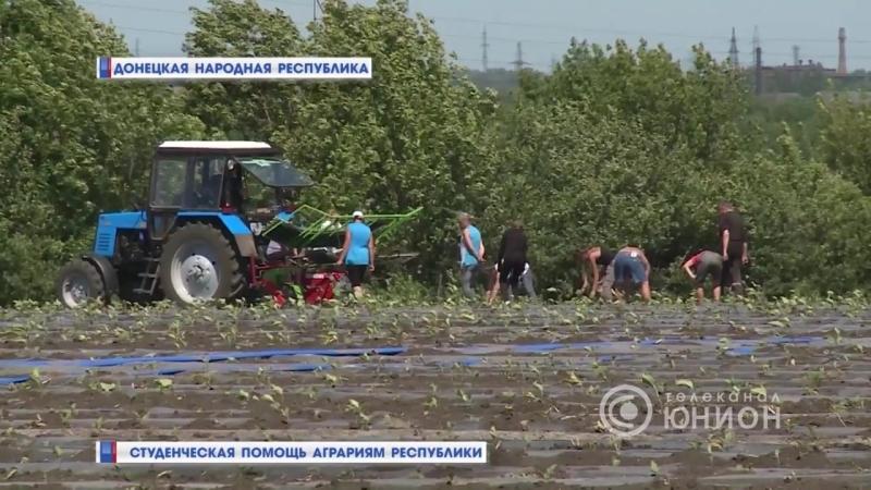 Студенческая помощь аграриям Республики.