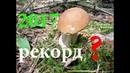 Как найти грибы в лесу летом 2017