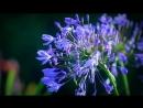 Ференц Лист -- Грезы любви / венг. Szerelmi álmok – Liszt