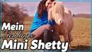 Mein Lieblings MINI SHETTY ✮ Riesige Shetty Herde! Ich besuche Zuschauerin ♥