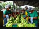 №3 Банановая индустрия Эквадора история отравлений