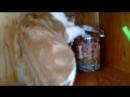 Кошка тырит вкусняшки