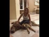 Ольга Орлова послала тех, кто осуждает ее за любовь к собакам