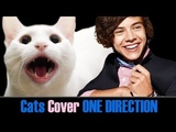 One Direction - Best Song Ever - Cats Cover