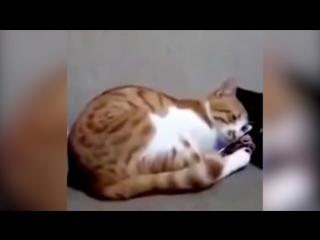 Кот увидел умершего хозяина на видео