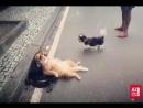 Hayatınİçinden Havlayan köpeğe tepki vermeyen kedinin o anları kaydedildi. st.coiYQTYgFme7.mp4