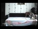 Собаке нельзя лезть на кровать