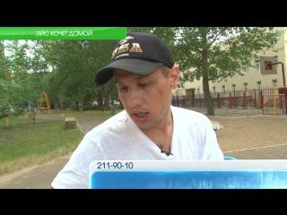 Выпуск новостей 09.07: Эйс хочет домой