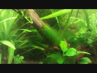 Борьба с водорослями. Сайдекс-1.mp4