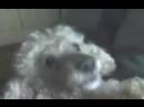 Наша первая собака Нэсся