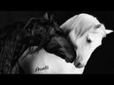 `Xexec Quafe Khix Uzun Kafe Enstrümantal Müzik`