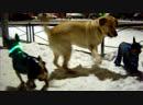 Милые смешные собаки играют