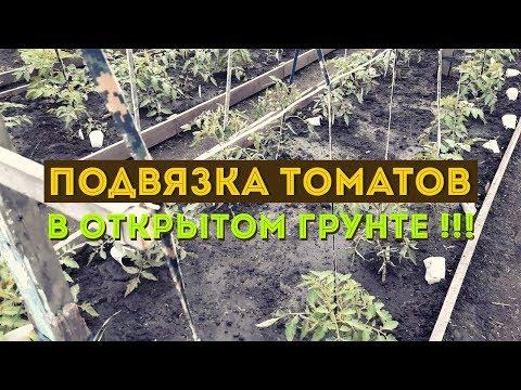 Подвязка томатов крупноплодных, высокорослых сортов