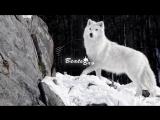 v-s.mobiStaFFорд63 SH Kera - Одинокий Волк 2018 Премьера