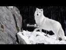 [v-s.mobi]StaFFорд63 SH Kera - Одинокий Волк 2018 Премьера