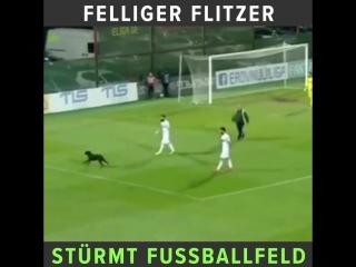 Ein hund hat ein fußballspiel in der georgischen liga minutenlang unterbrochen