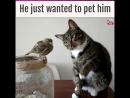 милота кот птица коте кошка игра