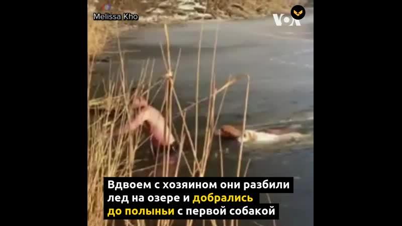 В США сибиряк вытащил из ледяного озера двух провалившихся псов