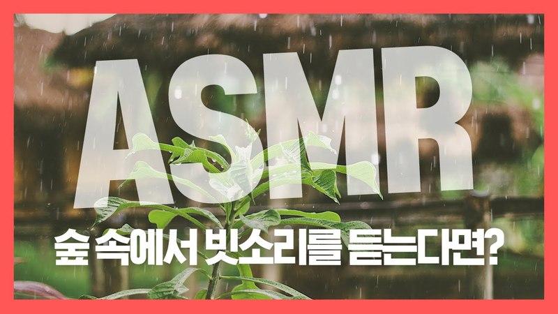 [집중력 높이는 소리] 숲 속에서 빗소리를 듣는다면 백색소음 ASMR ★ 공신 강성5346