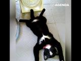 Кот кайфует от вентилятора