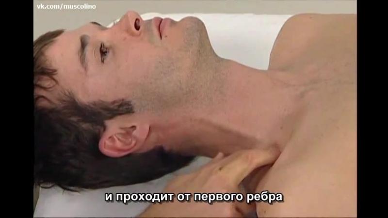 Пальпация мышц шеи