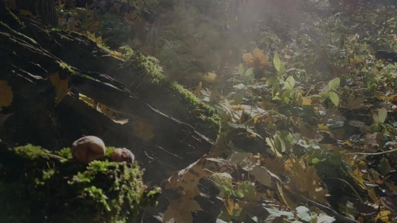 Дождевик_Smells Like Teen Spirit_16-10-2018