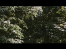 «Бешеные деньги» (1981) - комедия, реж. Евгений Матвеев