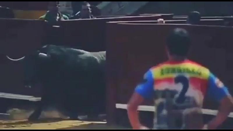 Тореадор играет с быками