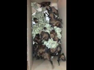 На свалке в Волгограде обнаружили 227 летучих мышей. Часть из них приютил у себя школьник из Волжского [NR]