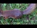 В гостях у белок, часть 2. Visiting squirrels, part 2.
