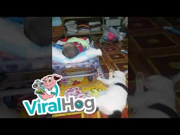 Cat Has Multitasking Perfected || ViralHog